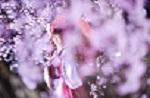 コスプレ桜祭.jpg
